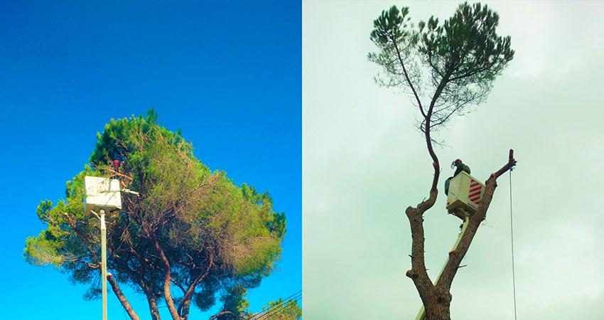 Tree Surgery - Ace of Spades Garden 06